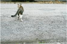 糞尿問題(犬、猫、人立ち小便含む)